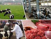 """""""عودة القرية المنتجة"""".. الزراعة تعتمد 3.3 مليار جنيه تمويلا لـ""""البتلو"""".. وتؤكد: نجحنا فى تسمين 224 ألفا و20 ألف رأس.. رئيس الثروة الحيوانية: ساهمنا فى توفير اللحوم وخفض الأسعار.. وتسهيلات جديدة لصغار المربين"""