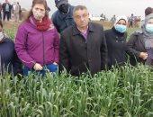 الزراعة تحذر مزارعى القمح من رى المحصول بسبب العواصف والأمطار