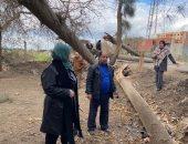 سقوط 14 شجرة بأماكن مختلفة بالقليوبية بسبب موجة الطقس السيئ