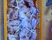 ضبط 692 كيلو مصنعات لحوم و1500 كيلو أسماك فاسدة في حملات بالإسماعيلية