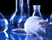شروط أخلاقية للتعامل مع حيوانات التجارب أبرزها عدم تعريضها للخطر