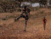 حرب الجراد تغزو كينيا وتدمر الحاصلات الزراعية .. ألبوم صور
