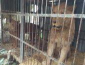 ضبط 22 حيوان برى خلال حملة مكبرة على مزرعة خاصة بطريق ترعة المنصورية