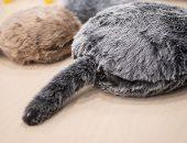 تداعيات عزلة كورونا.. حيوانات أليفة تعمل بنظام أندرويد في اليابان.. ألبوم صور