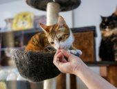 مقهى القطط كامل العدد . رحلة البحث عن متبنى.. ألبوم صور
