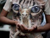 منع مصارعات الديوك ومشاركة القطط والكلاب فى السيرك .. كوبا تنتصر لحقوق الحيوان..ألبوم صور