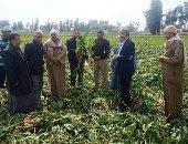 تنفيذ يوم حصاد لحقل إرشادى مزروع بمحصول بنجر السكر بقرية شنيط الحرابوه بالشرقية