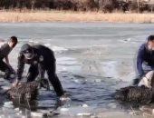 مواطنون ورجال شرطة ينقذون قطيع أغنام من الغرق فى نهر جليدى بالصين.. فيديو