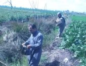 حملة لمكافحة القوارض بالشرقية لزيادة إنتاجية محصول القمح