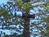 أريكة فوق شجرة مرتفعة تثير حيرة سكان مدينة أسترالية.. صور