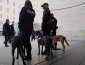 إيطاليا تدرب كلاب على رصد مصابى كورونا فى المطارات والمنافذ البرية.. فيديو