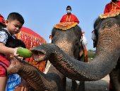 يوم الفيل الوطني في تايلاند.. رمز الملكية وحامي البلاد في وقت الحرب.. ألبوم صور