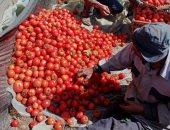 النيابة تباشر التحقيق فى واقعة قيام تاجر ومزارع بإلقاء محصول الطماطم بمجرى مائى