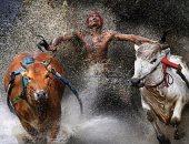 """100 صورة عالمية.. """"سباق الثيران"""" الرغبة القوية فى الفوز"""