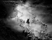 """100 صورة عالمية.. """"الراعى والقطيع"""" رحلة مستمرة بين غبار الحياة"""