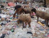 أهالى مسطرد بالقليوبية يشكون من انتشار القمامة.. والمحافظة توجه بشن حملة مكبرة