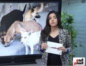 أكثر من 400 ألف عضة سنويا.. تفاصيل خطة نقابة البيطريين لحصر الكلاب الضالة (فيديو)