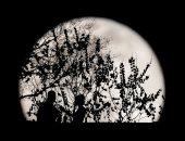 تفاصيل البحث عن 15 شجرة على الأرض من بذور تم نقلها حول القمر