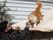البقاء للأقوى.. مأوى حيوانات يطلق 1000 قطة برية لمواجهة غزو الفئران فى شيكاغو