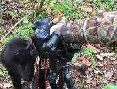 قرد يتقمص دور مصور محترف فى محمية طبيعية بإندونيسيا.. فيديو وصور