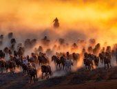 """100 صورة عالمية.. """"الفارس والخيول"""" مكر مفر مقبل مدبر معا"""