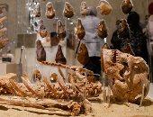 المتحف القومى للحضارة.. رحلة مصرية عمرها 35 ألف سنة