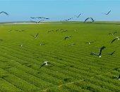 نقيب الزراعيين يتوقع الوصول للاكتفاء الذاتى من السكر خلال عامين