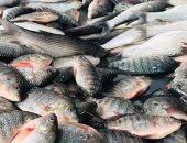 تراجع الواردات المصرية من الأسماك إلى 945 مليون جنيه فى شهر واحد