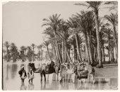 """100 صورة عالمية..  """"رجال وجمال فى نهر النيل"""" فى القرن الـ 19"""