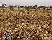 نصائح وزارة الزراعة للمزارعين عند حصاد القمح.. اعرف التفاصيل