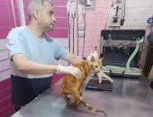 إجراء عملية جراحية بفك قط بعد تعدى شخص عليه بكفر الشيخ.. صور