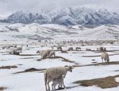 الجليد يودع جبال الصين والشمس ترفع رأية الذوبان استقبالا للربيع.. ألبوم صور