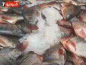"""""""اعرف قبل ماتنزل"""".. أسعار وأنواع السمك في الأسواق الشعبية"""