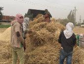 الزراعة تعلن حصاد 1.2 مليون فدان قمح.. وتوريد مليون طن للتموين