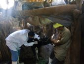 تحصين 6585 رأس ماشية للوقاية من الحمى القلاعية والوادى المتصدع في بنى سويف