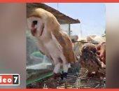 سوق الجمعة بالسيدة عائشة.. أقدم استراحة مفتوحة لبيع الحيوانات النادرة (فيديو)