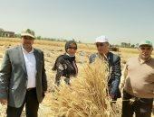 زراعة الشرقية: تقديم كل التيسيرات للمزارعين وتوريد 456 ألف طن قمح للصوامع