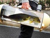 شركة يابانية تبتكر حقيبة للسير بالأسماك الحية فى الشوارع