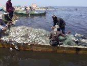"""بحيرة البردويل.. من هنا يخرج أشهر أنواع سمك الدنيس والقاروص والبوري """"صور"""""""