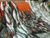 تعرف على أنواع الأسماك وأغرب طرق الطهى بمحافظة مطروح.. فيديو