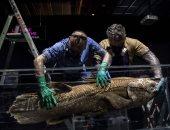 صيادون فى مدغشقر يعثرون على سمكة تعود إلى 420 مليون عام.. فيديو وصور