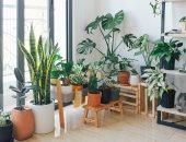 اعرفى أنواع النباتات المناسبة لكل غرفة داخل المنزل.. لبيت جميل وصحى