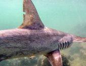 العثور على سمكة حية يعود تاريخها لـ420 مليون عام.. فيديو
