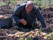 الزراعة تواصل فحص تقاوى البطاطس المحلية استعدادا للموسم الجديد