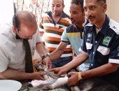 تطعيم الكلاب واستخراج 2400 رخصة بمستشفى الحيوانات الأليفة ببورسعيد.. فيديو وصور