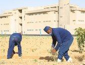 ماذا يزرع السجناء خلف أسوار السجون؟.. فيديو