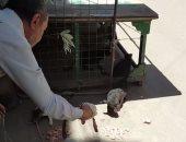 القطط عارفاه وبيأكلهم بإيديه.. شاهد ما يفعله عم مسعد صديق القطط بالمحلة يوميا.. صور