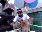 """يوتيوبر يربط كلبه ببالونات الهليوم ويجعله يطير فى الهواء.. اعرف مصيره """"فيديو وصور"""""""