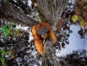 إنسان الغاب.. يتربع على عرش الصور الفائزة بجائزة مصور الطبيعة 2021.. ألبوم صور