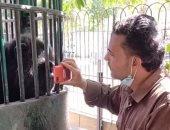 """شاهد ماذا فعل الشمبانزى """"كوكو"""" عندما رأى نفسه على الموبايل"""